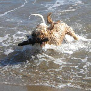 Dogs swimming in the sea